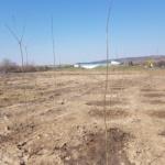 3500 de puieti de pomi plantati in Cartierul Tineretului din Oradea