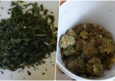 Cannabis confiscat in Oradea, de la o firma ce vindea on-line si en-detail
