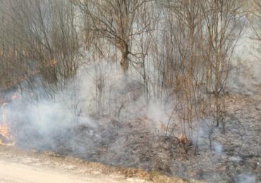 Inconstienta! O padure de langa Budureasa la un pas de a fi mistuita de focul pus de localnici pentru a arde miristea