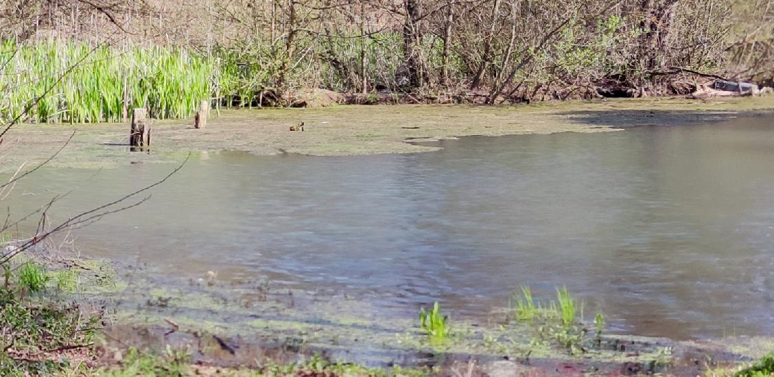 """Lacul Termal din Baile 1 Mai """"Ochiul Mare"""" are din nou apa termala"""