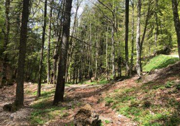 Decizie fara precedent in Romania: Pădurile seculare ies din circuitul economic și intră sub protecție
