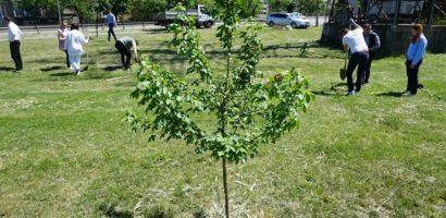 Oradea Verde: 250 de arbori diferiti, plantati in Oradea in 2 zile
