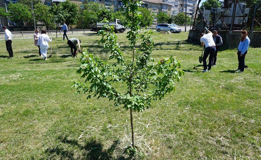 Primaria Oradea va incepe, in cursul lunii aprilie, o campanie de plantare de pomi. Zece strazi vor fi plantate cu tei, celtis si dud ornamental