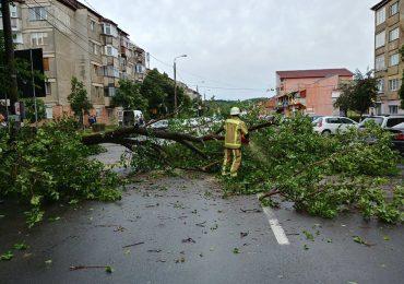 Codul galben de vant, aflat inca in vigoare, a doborat mai multi copaci in Oradea si judetul Bihor