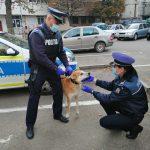 Noi reglementari privind protectia animalelor, iar IPJ Bihor angajeaza ofiteri si agenti la biroul pentru protectia animalelor