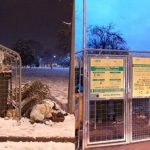 145 de Asociatii de Proprietari sanctionate de Politia Locala Oradea pentru lipsa curateniei in incintele de colectare a gunoiului