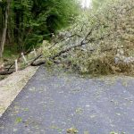 Se toaleteaza copacii degradati de pe marginea drumurilor nationale si judetene din Bihor