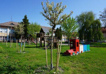 Arbori ornamentali plantați în curțile interioare ale unor unități de învățământ din municipiu