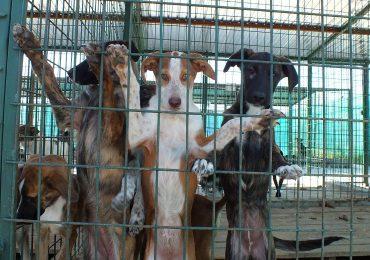 In judetul Bihor se vor realiza patru adaposturi pentru gestionarea cainilor fara stapani