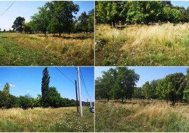 Inca un parc in Oradea. Primaria va construi un parc, pe o suprafata de 1,5 hectare, in Cartierul Tineretului
