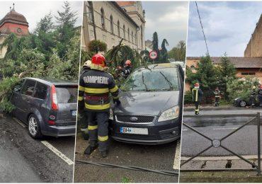 Vijelia din aceasta dupa amiaza a doborat mai multi copaci, in Oradea, Salonta si Baile Felix, pe carosabil si 4 masini. In doua autovehicule erau persoane