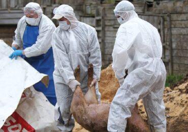 Santandrei Metropolitan Area a reușit să blocheze înființarea unui incinerator de animale pe raza comunei